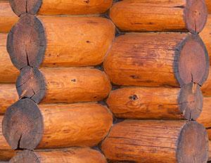 wood-log-closeup